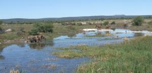 Madikwe Park - Il laghetto