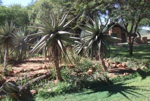 Madikwe Park
