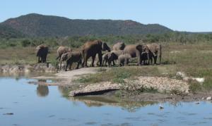 Madikwe Park - Elefanti